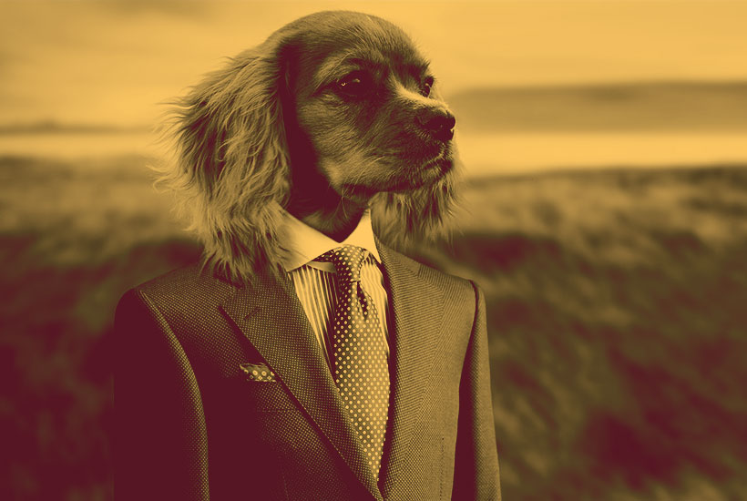 dog in business suit gets ready for hard work