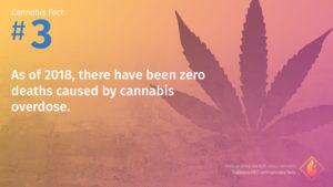 Cannabis Fact 3