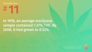 Cannabis Fact 11
