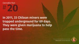 Cannabis Fact 20