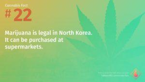 Cannabis Fact 22
