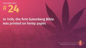 Cannabis Fact 24