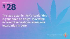 Cannabis Fact 28
