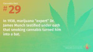 Cannabis Fact 29