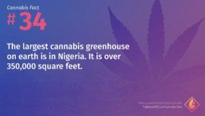 Cannabis Fact 34