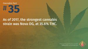 Cannabis Fact 35