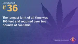 Cannabis Fact 36