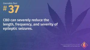 Cannabis Fact 37