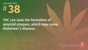 Cannabis Fact 38