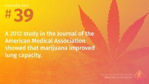 Cannabis Fact 39