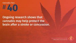 Cannabis Fact 40