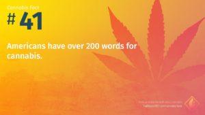 Cannabis Fact 41