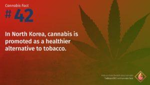 Cannabis Fact 42