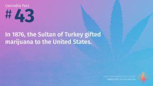 Cannabis Fact 43