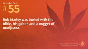 Cannabis Fact 55