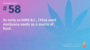 Cannabis Fact 58