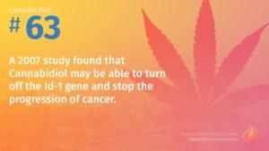 Cannabis Fact 63