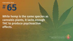 Cannabis Fact 65