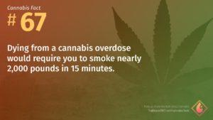 Cannabis Fact 67