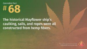 Cannabis Fact 68