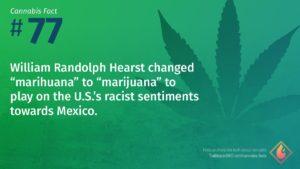 Cannabis Fact 77