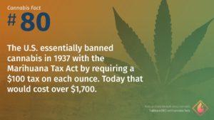 Cannabis Fact 80