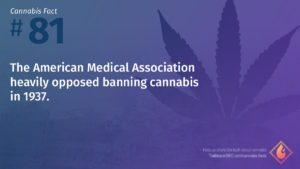 Cannabis Fact 81