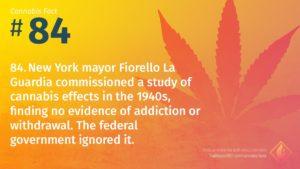 Cannabis Fact 84