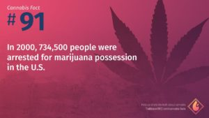 Cannabis Fact 91