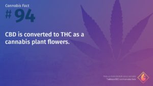 Cannabis Fact 94