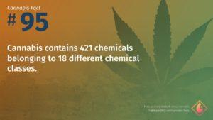 Cannabis Fact 95