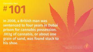 Cannabis Fact 101