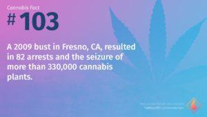 Cannabis Fact 103