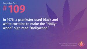 Cannabis Fact 109