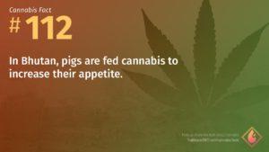 Cannabis Fact 112