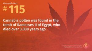 Cannabis Fact 115