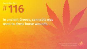 Cannabis Fact 116